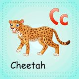 Animals alphabet: C is for Cheetah Royalty Free Stock Photo