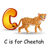 Animals alphabet: C is for Cheetah Royalty Free Stock Image