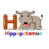 Animals alphabet: H is for Hippo Royalty Free Stock Photo