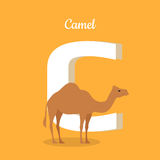 Animals Alphabet. Letter - C. Brown camel stands near letter. Alphabet learning chart with animal illustration for letter and animal name. Vector zoo alphabet Royalty Free Stock Photo
