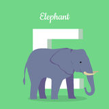 Animals Alphabet. Letter - E. Blue elephant stands near letter. Alphabet learning chart with animal illustration for letter and animal name. Vector zoo Stock Photography