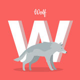 Animals Alphabet. Letter - W. Gray wolf stands near letter. Alphabet learning chart with animal illustration for letter and animal name. Vector zoo alphabet Royalty Free Illustration