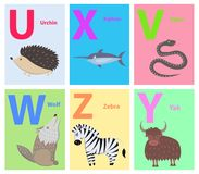 Animals on Alphabet Poster for Kids Illustration. Alphabet poster with U, X, V, W, Z, V letters vector illustration. Prickly urchin, funny xiphias, black viper Stock Illustration