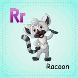 Animals alphabet: R is for Raccoon. Illustration of  Animals alphabet: R is for Raccoon Stock Photos