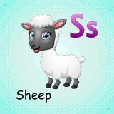 Animals alphabet: S is for Sheep Stock Images
