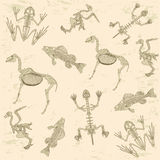 Animals anatomy, skeleton pattern. Animals anatomy, skeleton of horse, pigeon, frog and turtle, archeology biology or history pattern Royalty Free Stock Photo