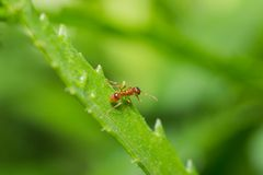 Animals ant Stock Photos