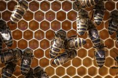 Animals, Apiary, Beehive Royalty Free Stock Photo