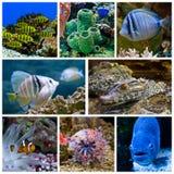 Animals in the Aquarium. Various colorful fish and corals in the aquarium royalty free stock image