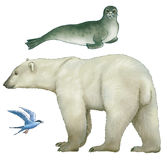 Animals of Arctic. Regions on a white background Stock Images