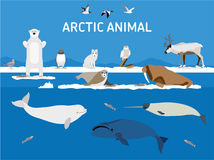 Animals of the Arctic. Flat style illustration. Animals of the Arctic. Vector Set of polar mammals and birds. Flat style illustration. Penguin, seal, lemming vector illustration