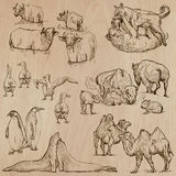 Animals Around The World (part 20). Hand Drawn Vector Pack. Royalty Free Stock Photos