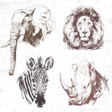 Animals around the World (Africa). stock illustration
