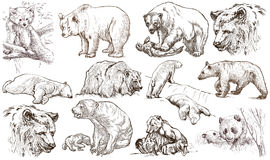 Animals around the World. Bears. An hand drawn full sized pack. Royalty Free Stock Photos