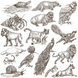 Animals around the World - An hand drawn full sized pack. Hand d