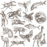 Animals around the World - An hand drawn full sized pack. Hand d Royalty Free Stock Photo