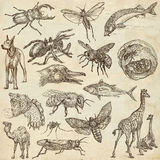 Animals around the World - An hand drawn full sized pack. Hand d Royalty Free Stock Photography
