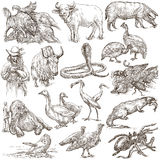 Animals around the World - An hand drawn full sized pack. Line a Royalty Free Stock Photos