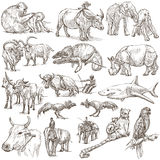Animals around the world - an hand drawn pack. Hand drawn illustratoins of Animals around the World. Different snapshots. Full sized hand drawing collection Stock Photos