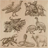 Animals around the World - An hand drawn vector pack. Line art. Royalty Free Stock Image