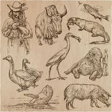 Animals around the World - An hand drawn vector pack. Line art. Royalty Free Stock Photo
