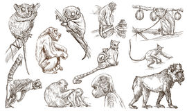 Animals around the World. Monkeys and Apes. An hand drawn full s. Animals - MONKEYS and APES - around the World. Collection of an hand drawn illustrations Royalty Free Stock Images