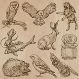 Animals around the World (part 17). Hand drawn vector pack. Stock Photography