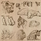 Animals around the World (part 21). Hand drawn vector pack. Stock Image