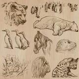 Animals around the World (part 21). Hand drawn vector pack. Stock Image