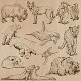 Animals around the World (part 22). Hand drawn vector pack. Royalty Free Stock Photo