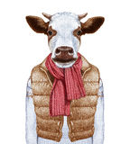 Animals as a human. Portrait of Cow in down vest and sweater. Hand-drawn illustration, digitally colored Royalty Free Stock Image