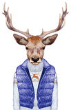 Animals as a human. Portrait of Deer in down vest and sweater. Stock Photo