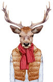 Animals as a human. Portrait of Deer in down vest, sweater and scarf. Hand-drawn illustration, digitally colored Stock Photography