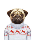Animals as a human. Portrait of Pug Dog in sweater. Hand-drawn illustration, digitally colored Stock Images
