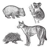 Animals of Australia. Koala bear, Wombat, Echidna, Dingo Dog. Royalty Free Stock Photos