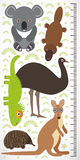 Animals Australia - koala kangaroo lizard platypus echidna emu. Children height meter wall sticker Royalty Free Stock Image