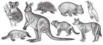 Animals of Australia set. Koala bear, wombat, echidna, dingo dog, Tasmanian devil, platypus, wallaby or kangaroo, cockatoo bird realistic  on white background Stock Photo