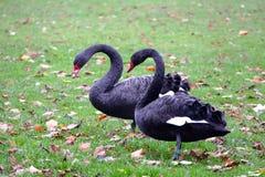 Animals, Avian, Beaks Stock Photos