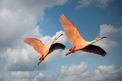 Animals, Avian, Beaks, Birds Stock Photos