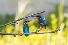 Animals, Avian, Birds Royalty Free Stock Image
