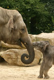 Animals: baby and mother elephant royalty free stock photos