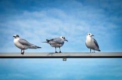 Animals, Beak, Birds Royalty Free Stock Photography