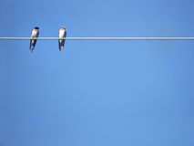 Animals - birds. Two little swallows sitting upon a wire Royalty Free Stock Photos