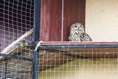 Animals and birds in a cage Royalty Free Stock Photo