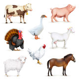 Animals and birds Stock Photography