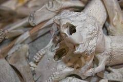 Animals bones Stock Photos