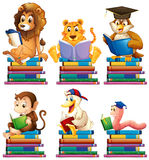 Animals and books Stock Photo