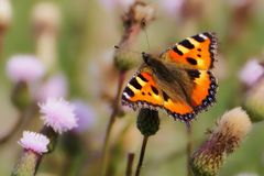 Animals, Butterfly, Little Fox Stock Photography