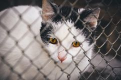 Sad cat in animal shelter. Animals in captivity concept. Cat looking very sad behind cage bars in animal shelter. Waiting for new owner and warm home royalty free stock image