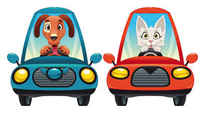 Animals in the car: Dog and Cat. Funny cartoon and  isolated characters Stock Image